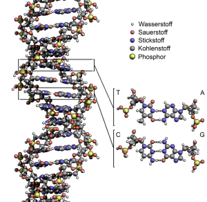 DNA-RNA-Protein
