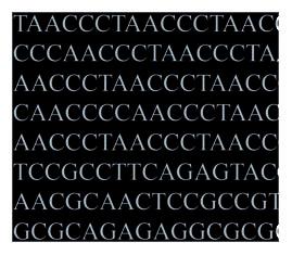 Das (humane) Genom